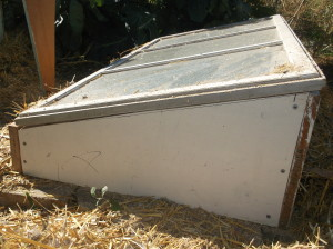 What's a cold frame? Just a box that shorter in the front and taller in the back to gather as much sunshine as possible. It as a window on top to trap all the sun warmed air (think of a car in teh summer with the windows rolled up) and keep plants warm all winter long.